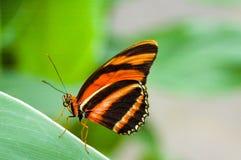 Vlinder op een blad royalty-vrije stock afbeeldingen