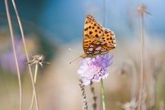 Vlinder op een bloem Stock Foto's