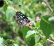 Vlinder op een bloem Royalty-vrije Stock Afbeelding