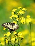 Vlinder op een bloem. Royalty-vrije Stock Afbeelding