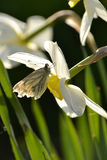 Vlinder op een bloem Stock Fotografie