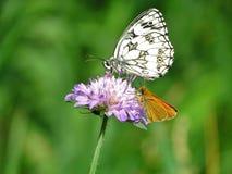 Vlinder op een bloem Royalty-vrije Stock Foto's