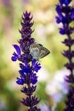 Vlinder op een bloem van de de zomerweide Stock Foto's