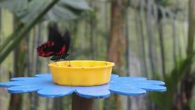 Vlinder op een bloem-Vormige Trog stock footage