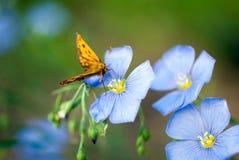 Vlinder op een bloemvlas Royalty-vrije Stock Foto's