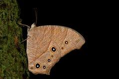 Vlinder op een boomboomstam Royalty-vrije Stock Foto