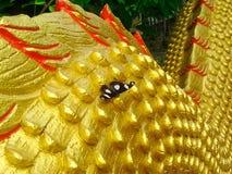 Vlinder op een Draak Royalty-vrije Stock Afbeeldingen