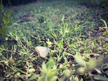 Vlinder op een gebied royalty-vrije stock fotografie
