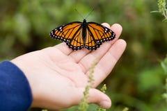 Vlinder op een hand. stock afbeelding
