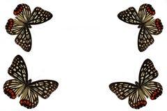 Vlinder op een schone achtergrond stock foto