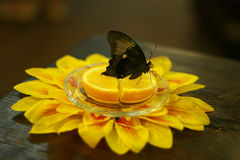 Vlinder op een schotel met sinaasappel en bloem stock foto