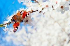 Vlinder op een tak Stock Fotografie