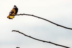 Vlinder op een tak Royalty-vrije Stock Afbeeldingen