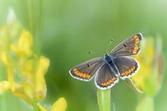 Vlinder op een verlof Stock Foto