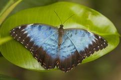 Vlinder op een verlof Royalty-vrije Stock Foto