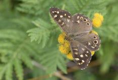 Vlinder op een wilde bloem in de zomer royalty-vrije stock foto