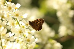 Vlinder op een wit met gele bloem stock fotografie
