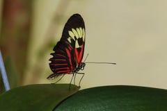 Vlinder op flower2 Stock Afbeeldingen