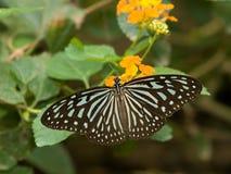 Vlinder op Gele Bloemen royalty-vrije stock afbeelding