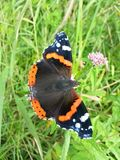 Vlinder op gras Stock Foto