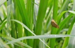 Vlinder op Gras Stock Afbeeldingen