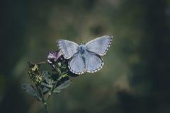 Vlinder op gras in mijn binnenplaats Royalty-vrije Stock Afbeeldingen