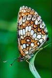 vlinder op green Royalty-vrije Stock Foto