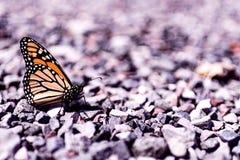 Vlinder op grint dichte omhooggaande pastelkleur stock afbeelding