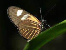 Vlinder op Groen Blad Royalty-vrije Stock Foto's