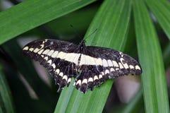 Vlinder op Groen Blad Royalty-vrije Stock Foto