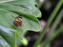 Vlinder op Groen Blad Stock Foto's
