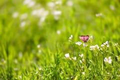 Vlinder op groen gras stock foto