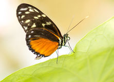 Vlinder op groene installatie Stock Afbeeldingen