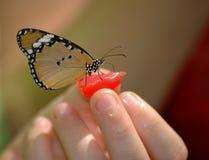 Vlinder op hand Royalty-vrije Stock Foto's