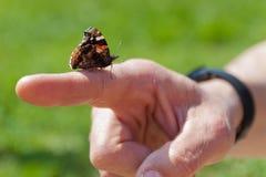 Vlinder op hand Stock Afbeeldingen