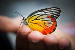 Vlinder op hand Stock Foto