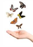 Vlinder op hand Stock Afbeelding