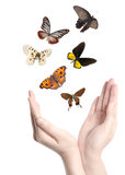 Vlinder op hand Royalty-vrije Stock Fotografie