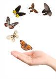 Vlinder op hand Royalty-vrije Stock Afbeeldingen