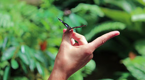 Vlinder op hand Royalty-vrije Stock Afbeelding