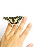 Vlinder op hand Stock Fotografie