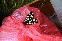 Vlinder op het afval Royalty-vrije Stock Foto