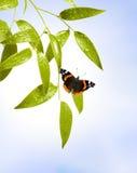 Vlinder op het blad Royalty-vrije Stock Foto