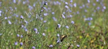 Vlinder op het gebied Royalty-vrije Stock Foto's