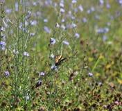 Vlinder op het gebied Royalty-vrije Stock Afbeeldingen