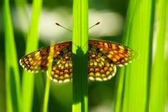 Vlinder op het gras Royalty-vrije Stock Foto's