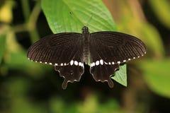 vlinder op het groene blad in tuin Royalty-vrije Stock Foto's