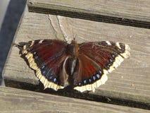 Vlinder op het hout Royalty-vrije Stock Afbeeldingen