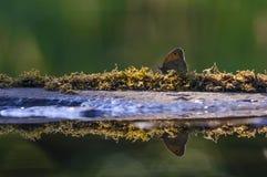 Vlinder op het strand Royalty-vrije Stock Afbeeldingen