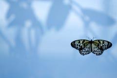 Vlinder op het venster Stock Afbeelding